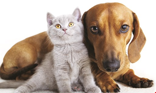 Product image for Vine Animal Hospital $20.00 /night cats & small dogs (under 15 lbs). $25.00 /night dogs (16-40 lbs). $30.00 /night dogs (41+ lbs). .