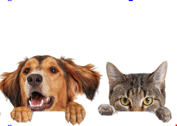 Product image for Birch Island Veterinary Center 20% OFF on Dental Packages for all first time clients