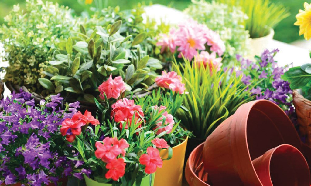 Product image for Northtown Garden Center $3.33 ea.ANNUALS mix & match