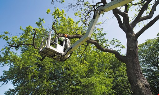 Product image for Tree Cutters Of Florida $100 off any job