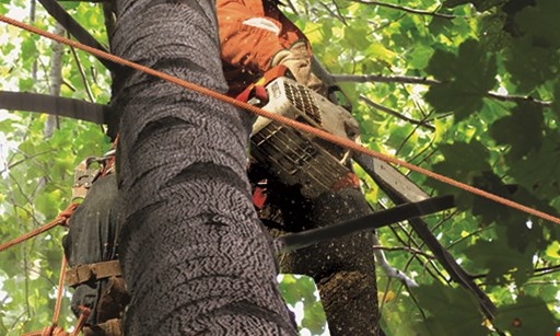 Product image for McCabes Tree Experts 10% Off any tree service or tree removal over $500.