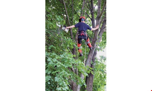 Product image for Mark's Tree Services 10% off any work Done By October 19, 2020
