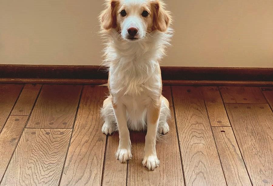 Product image for Kacey's Carpet & Tile FREE PADDING UPGRADE