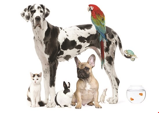 Product image for All 4 Pets $20 Off Any $100 Purchase