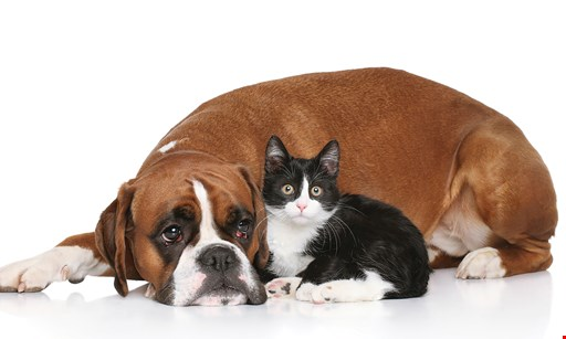Product image for Pacific Pets $10 offtotal purchase of $55 or more.