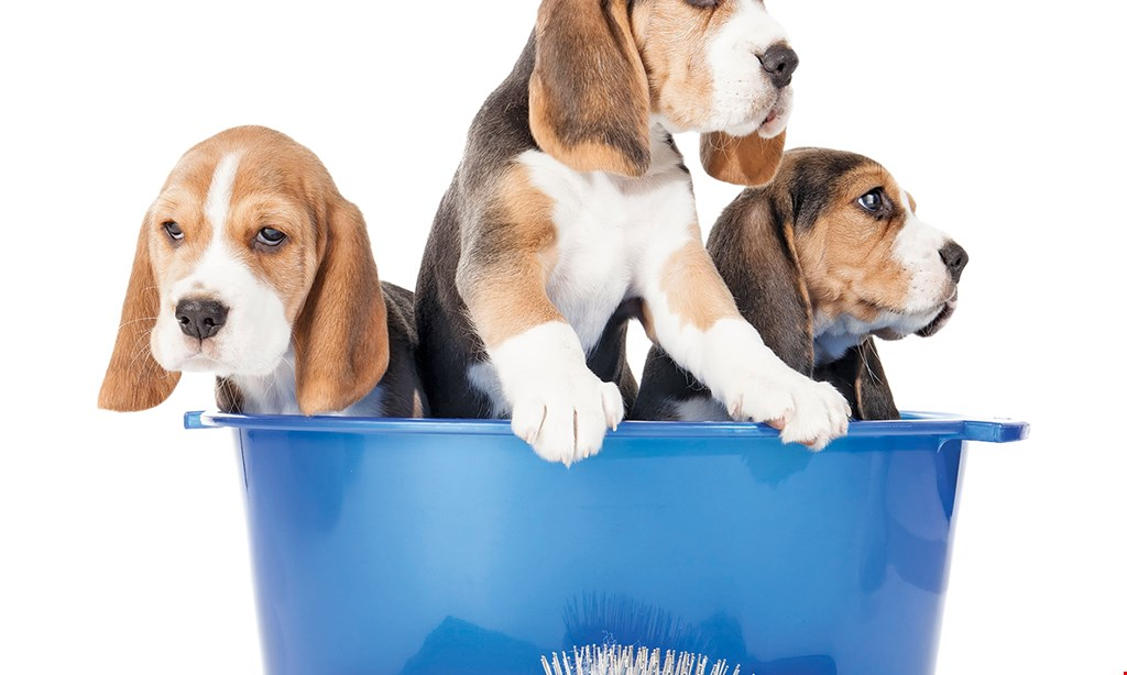 Product image for Tannenberg Kennels FREE Dog Bath With one night's boarding. Special shampoos available at slight additional cost.