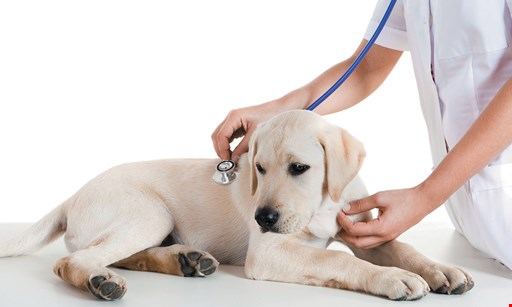 Product image for Highlands Ranch Animal Hospital 15% OFF Neuter or Spay