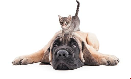 Product image for Jamacha Pet Vets FREE Adoption Exam