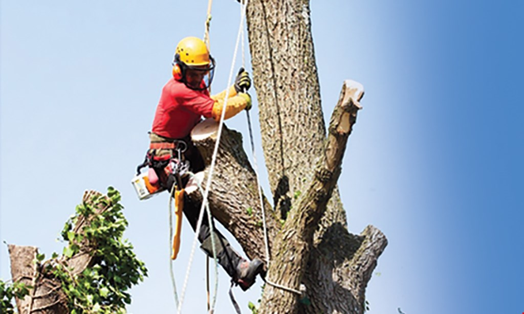 Product image for Liberty Tree Service $50 OFF Yard Clean Ups or Lot Clearing