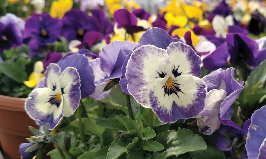 Product image for Sunscape Farms & Greenhouses FREE pack of annuals or veggie plants 4 or 6 pack only.