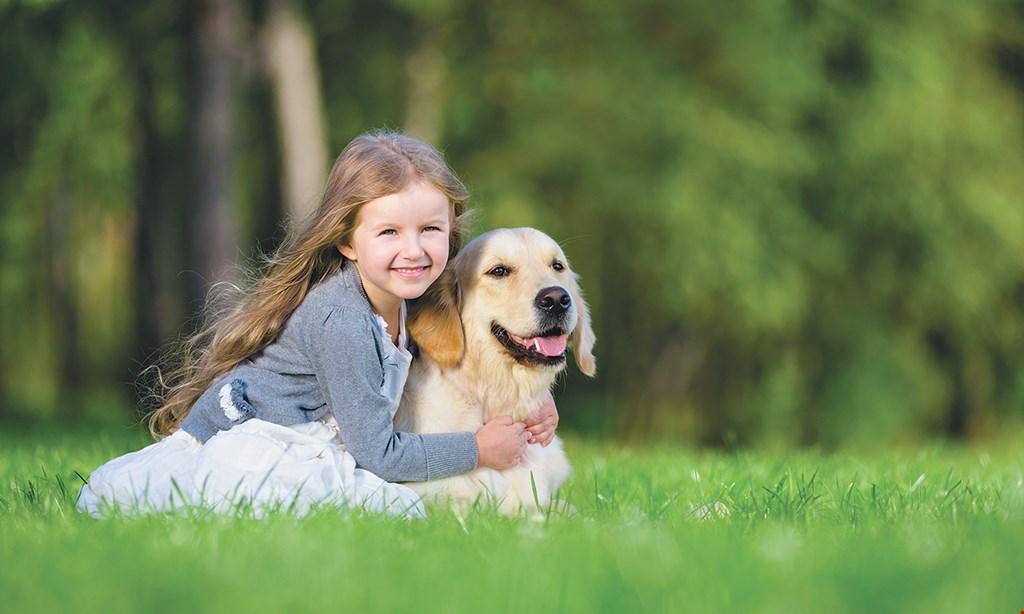 Product image for Kohn Animal Hospital DOG NEUTER $234 under 20 lb. $239 for 21-40 lb. $244 for 41-80 lb. $289 for 81-100 lb. $339 over 100 lb. includes: surgery, anesthesia, blood work, IV fluids & meds to go home.