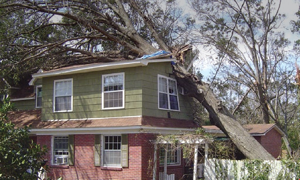 Product image for Mr. Falls Tree Experts $50 OFF All Mr. Falls Tree Services.
