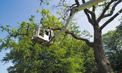 Product image for High Quality Tree Service 15% Off tree services, plus free stump grinding on all jobs over $1,500 (max. discount $300).