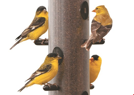 Product image for Wild Birds Unlimited Trade in an Old Feeder; Get 15% OFF a New One*.