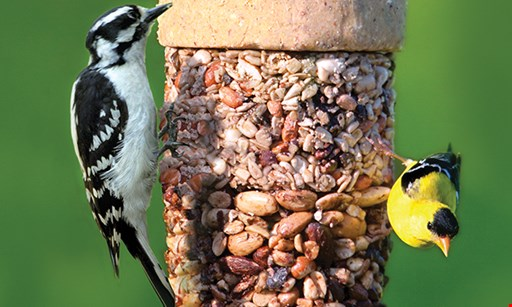 Product image for Wild Birds Unlimited 25% OFF Any one regularly-priced item*