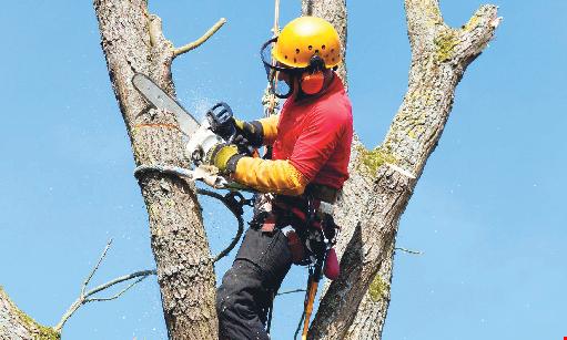 Product image for Arbor Tech Tree & Landscape FREE estimates plus $100 OFF sign on bonus