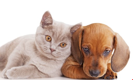 Product image for Pet Supplies Plus 12% off any purchase
