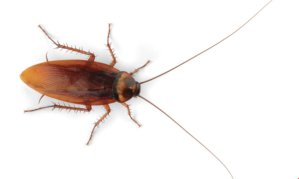 Product image for Escalera Pest Control $75 full termite inspection up to 3,000 sq. ft.