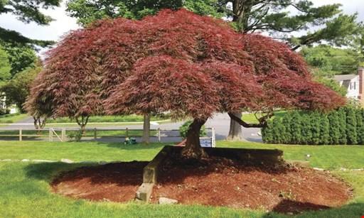 Product image for Five Star Landscaping LLC $100 off any tree or shrub job of $1,000 or more