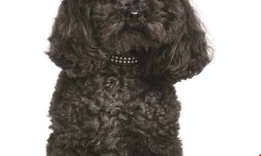 Product image for Pretty Up Your Pup $5 off all full grooming services