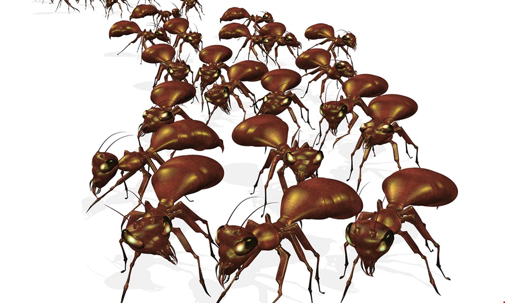 Product image for O'Connor Pest Control $199 1-time service w/ 30-day warranty.