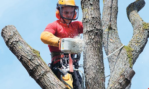 Product image for CPL Tree Service 15% OFF any job of $999 or less.