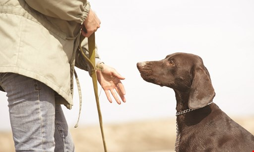 Product image for Devotion To Dogs 10% OFFtraining program.