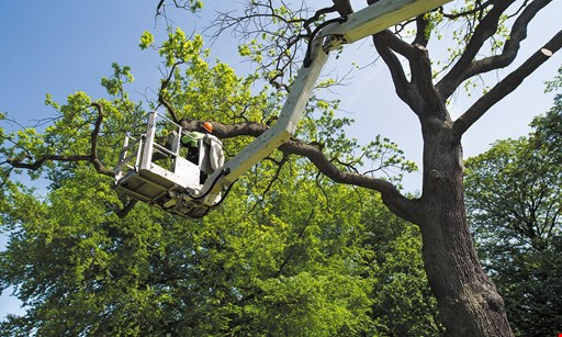 Product image for Tony'S Tree Service And Landscaping 10% off any Service over $500.