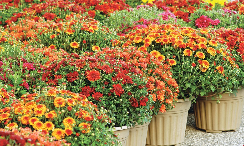 Product image for The Flower Bed FREE $25.00 FLOWER BED GIFT CERTIFICATE When You Buy Any Size Complete Scotts 4 Step Lawn Care Program!