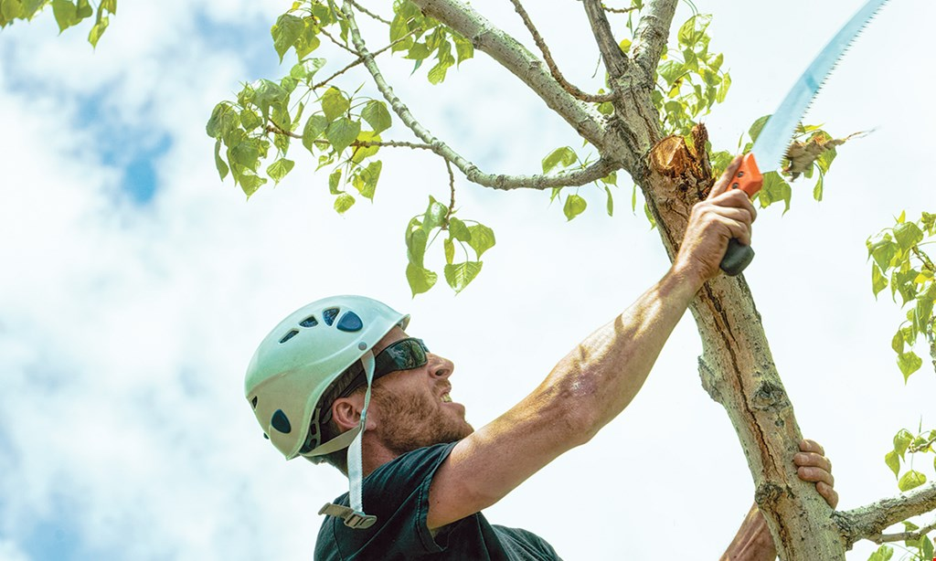 Product image for Marvel Tree Service $30 off any job of $300 or more