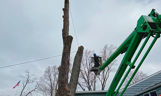 Product image for Alejandres Tree Service 15% Off any tree services
