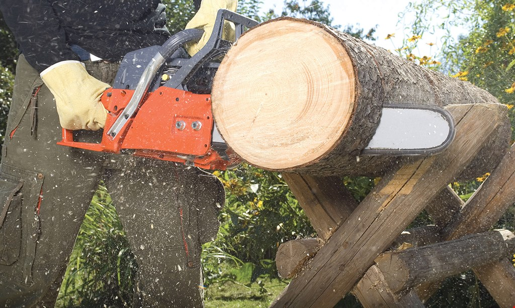 Product image for Cheap And Great Tree Service 25% OFF any job of $1,000 or more.