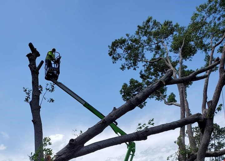 Product image for Southern Cuts Tree Service, llc $100 off any project of $500 or more.