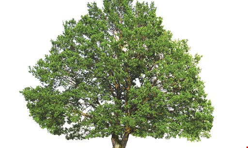 Product image for White Horse Tree Care $100 Off any job of $999 or more.