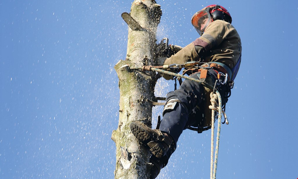 Product image for Best Quality Tree Service 20% OFF tree service plus free stump grinding on all jobs $1500 or more.