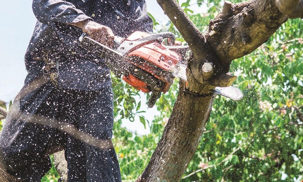 Product image for Tanzola Tree Service, Llc $50 OFF min. $500 job.