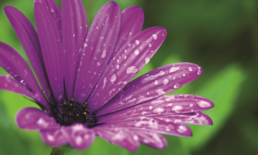 Product image for Dan West Garden Center 20% off perennials