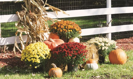 Product image for Perricone Garden Center & Nursery 30% OFF Any 1 Itemin the Garden Shop