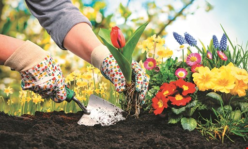 Product image for Bell Nurseries, Inc. $13.99 Pansy Flats - 48 plants loaded with color.