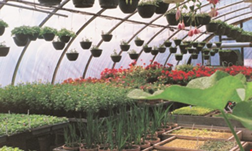 Product image for Katonah Nursery $100 off any landscaping installation of $1,000 or more.