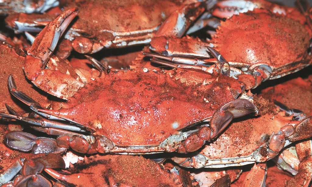 Product image for Blue Point Crab House $5 off a dozen crabs