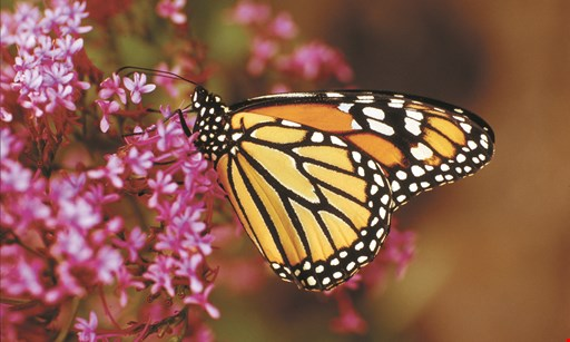 Product image for Butterfly World $6 off each general admission.
