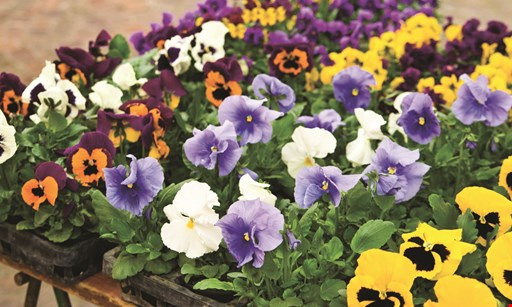 Product image for Frenz Garden Center $5 off any purchase of $25 or more.