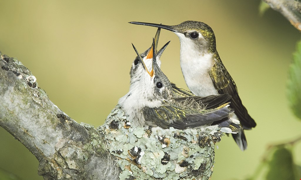 Product image for Wild Birds Unlimited SAVE NOW $10 OFF $50