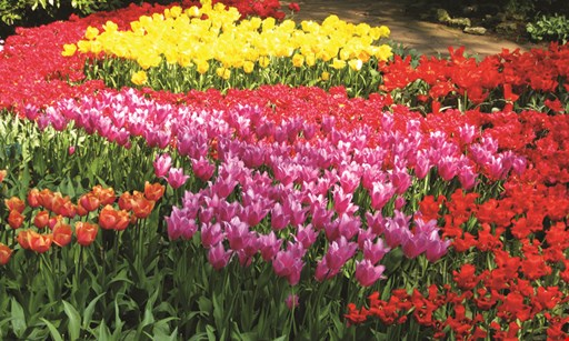 Product image for Waldwick Gardens Free mum! buy 6 mums, get 1 free
