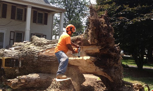 Product image for Pro-Cut Tree FREE stump grinding