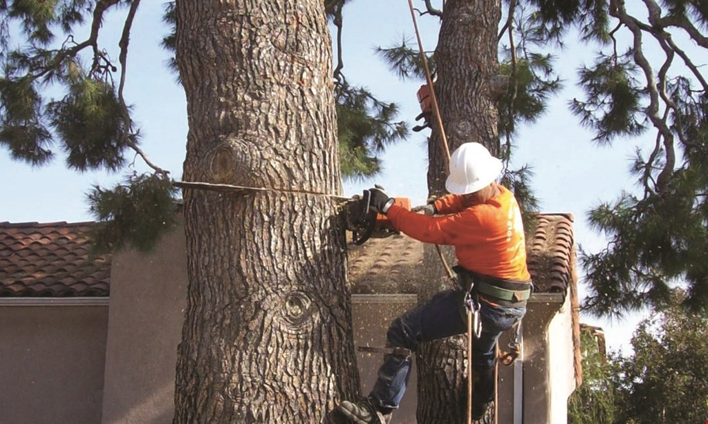 Product image for Gold Coast Tree Service $50 off any job of $500 or more