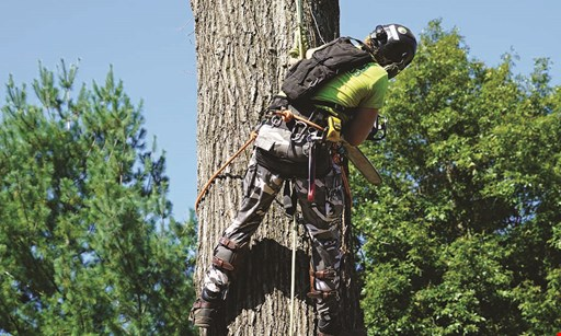 Product image for A1 PROTREEGUY $200 off Free stump grinding orany tree service