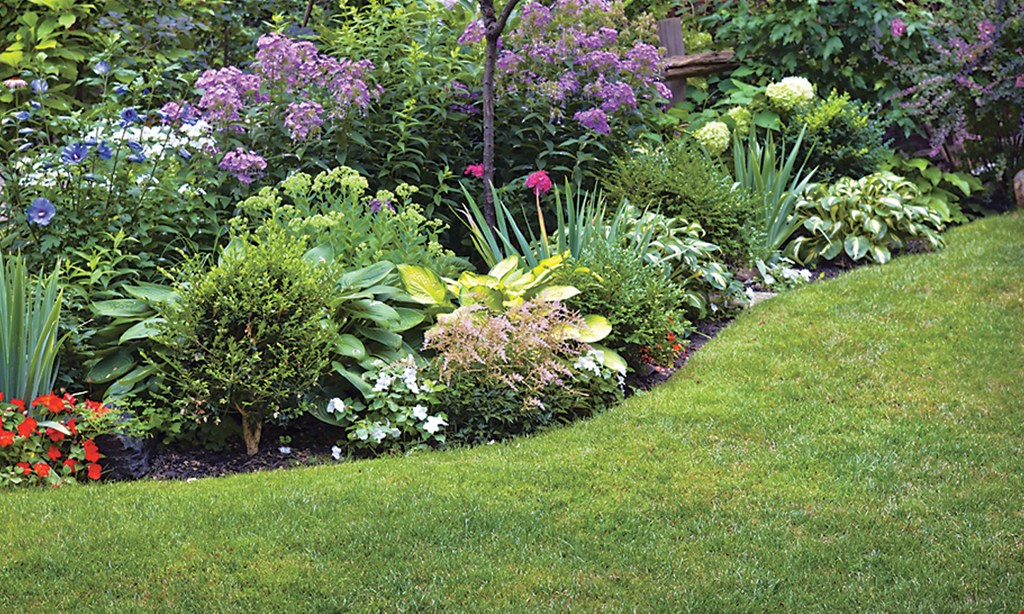 Product image for All Turf Lawn Care $60 OFF Your Annual Lawn Program