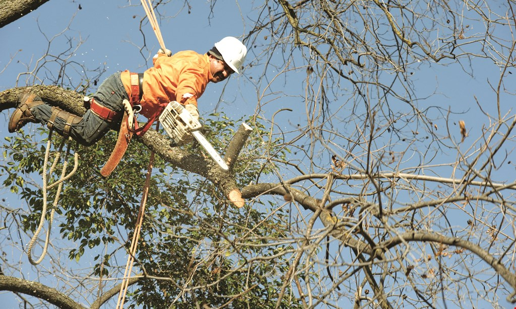 Product image for Zack's Tree Service 30% OFF discount on all tree work.